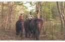 LA ROUTE DES ELEPHANTS