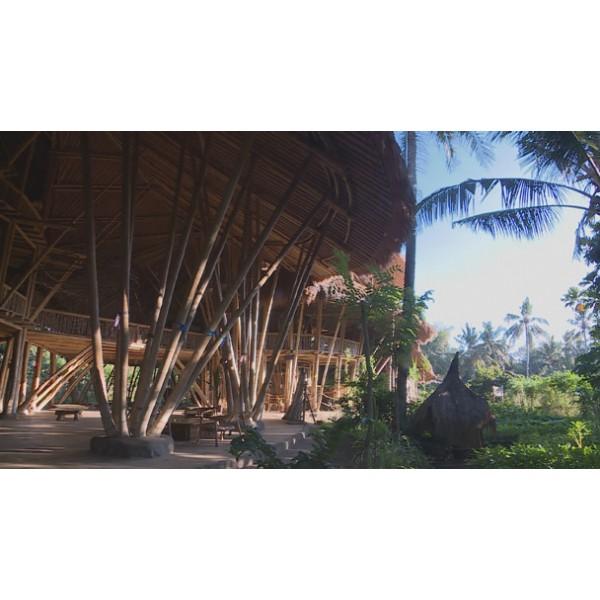 Tout Sur Le Bambou 28 Images Tout Sur Le Bambou Tout Savoir Sur
